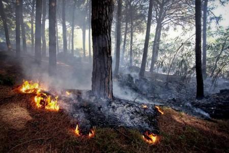 Canadair e vigili del fuoco al lavoro su due incendi di vaste proporzioni che hanno interessato la zona di Pozzuoli ed un versante del Vesuvio, 04 settembre 2013. ANSA/CIRO FUSCO