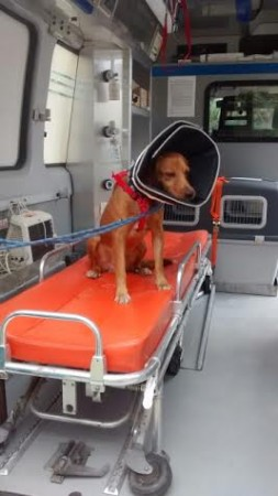 Un cane nell'ambulanza veterinaria