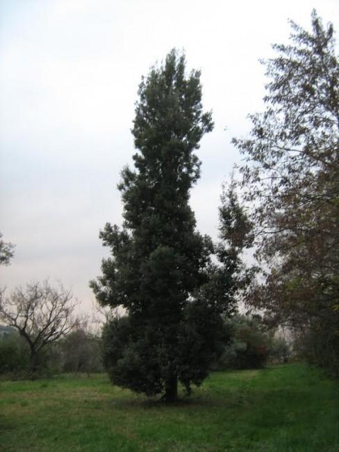 Fontescodella piante 7