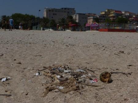 spiaggia libera civitanova sporcizia26