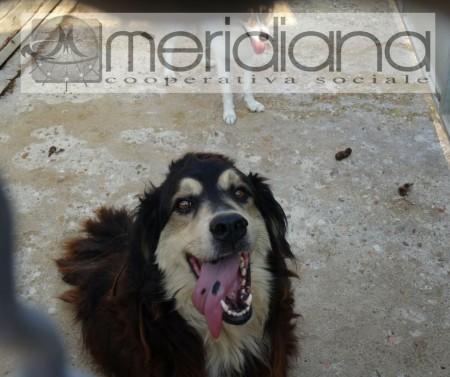 Uno dei cani della cooperativa Meridiana