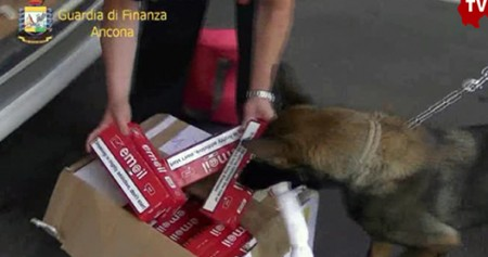 cane gaby antitabacco 0