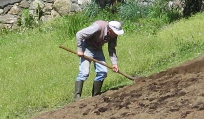 contadini-al-lavoro-4-650x381
