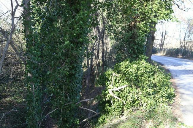 Alberi caduti in zona Valle Cascia