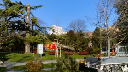 Cedro caduto Giardini Diaz (2)