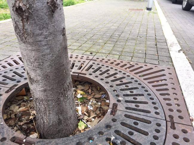 Le due siringhe alla base dell'albero