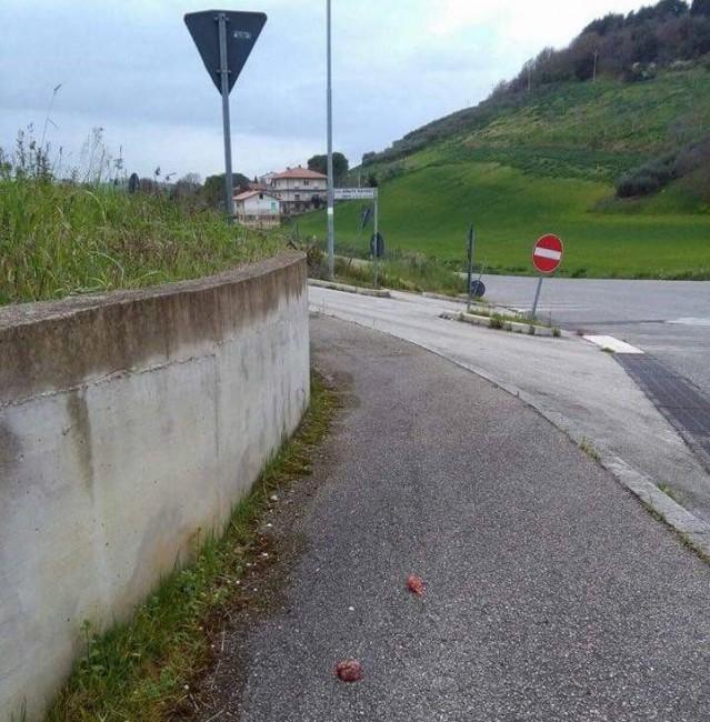 Le polpette avvelenate lasciate in via Santa Caterina a Montelupone