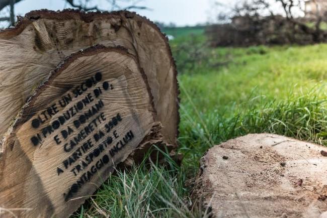 La scritta sulla base della quercia