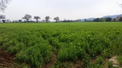 Il terreno a Pian della Castagna, al confine tra Treia e Cingoli