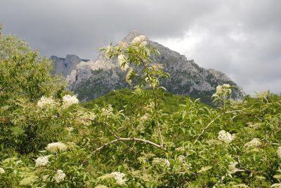 Il monte Bove visto da Ussita