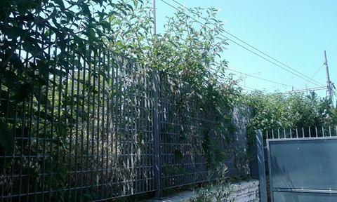 vegetazione stazione2