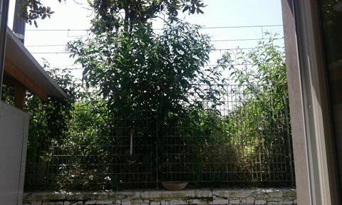vegetazione stazione3