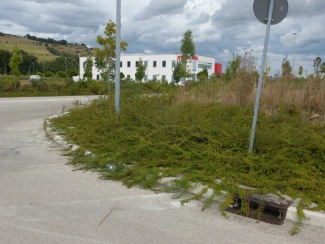valleverde-erba-alta-piediripa-maceratap1080342