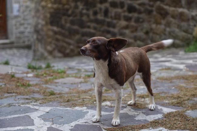post-terremoto-cane-tito-forca-di-montegallo-2