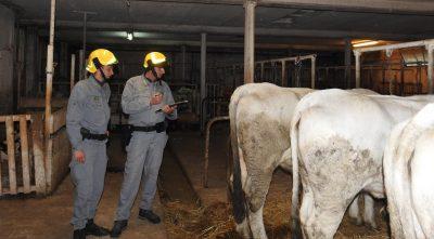 guardia-forestale-3-Sopralluogo-presso-un-allevamento-inagibile-in-Vallestretta-di-Ussita-400x221