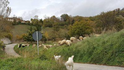 pecore2-400x225