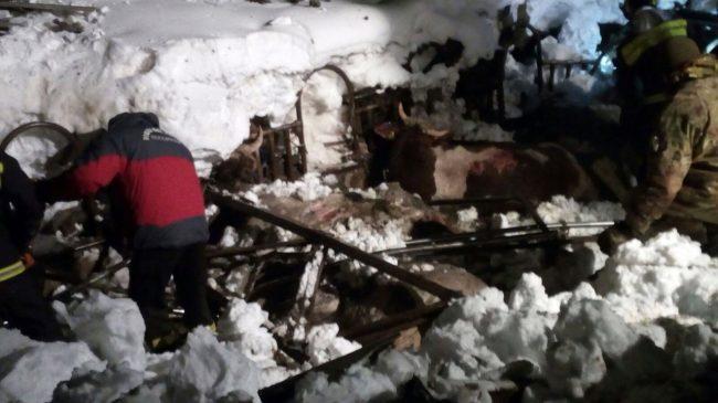 Gualdo-stalla-azienda-beccerica_-animali-terremotati-neve-6-650x365