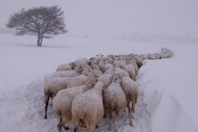 animali-neve-azienda-agricola-scolastici-visso-2-400x267
