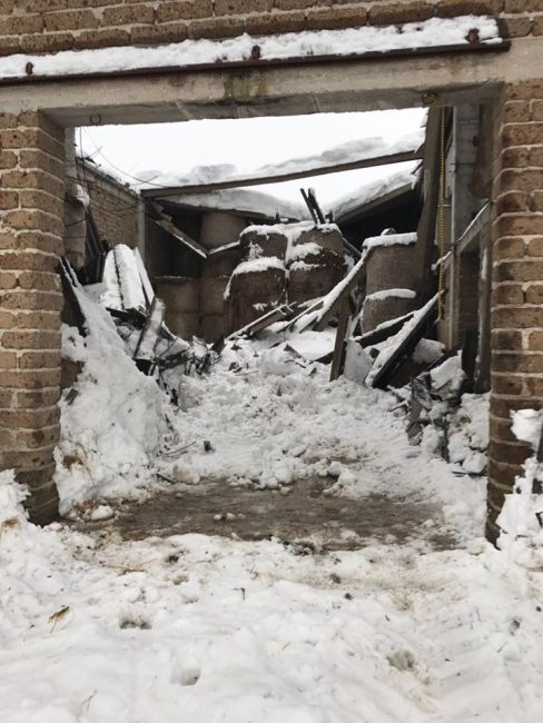 animali-terremotati-neve-Società-Agr.-LAI-ss-3-488x650