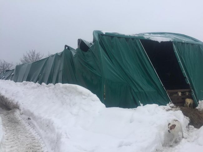 animali-terremotati-neve-Società-Agr.-LAI-ss-4-650x488