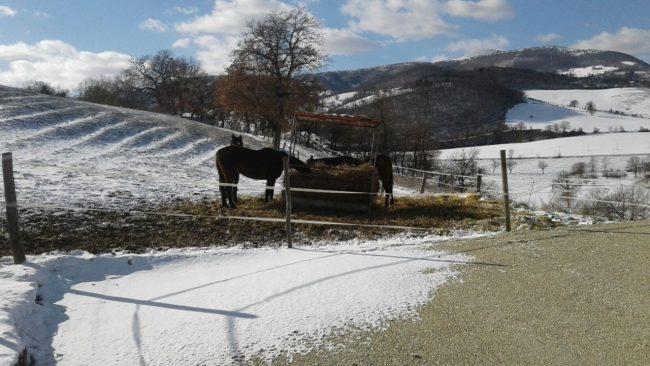 cavalli-liberti-pievebovigliana-neve