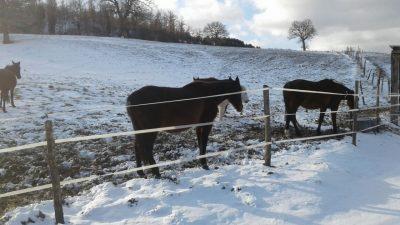cavalli-liberti-pievebovigliana-neve1-400x225
