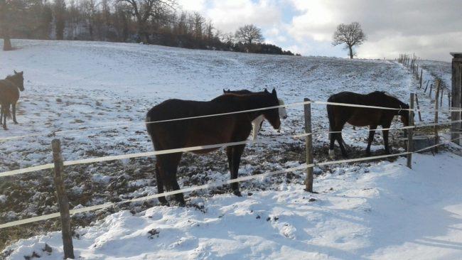 cavalli-liberti-pievebovigliana-neve1-650x366