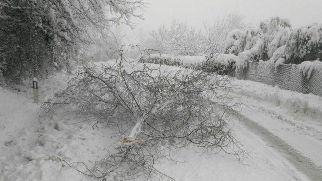 contrada-ancaiano-tolentino-neve-ramo