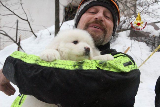 cuccioli-cane-salvati-hotel-rigopiano-3-650x433