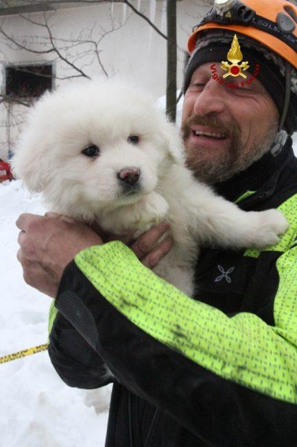 cuccioli-cane-salvati-hotel-rigopiano-6-433x650
