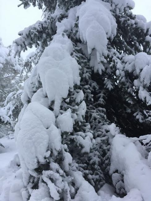 foto-lettori-neve-silvia-concetto-loro-piceno-san-lorenzo-2-488x650