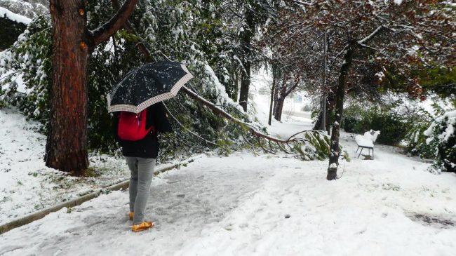 neve-macerata-gennaio-2017_Foto-LB-12-1-650x365