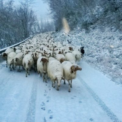 pecore-pieve-torina