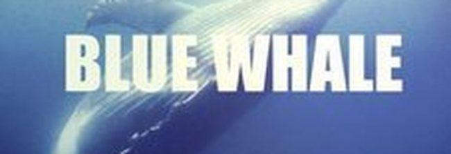 blue-whale-1-650x223