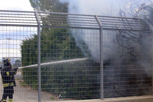 incendio-siepe-stadio-helvia-recina_foto-LB-4-650x433