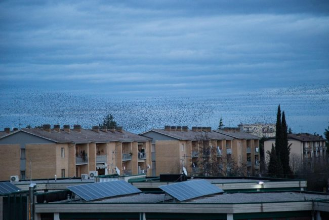 stormo-di-uccelli-storni-macerata-2017-foto-ap-4-650x434