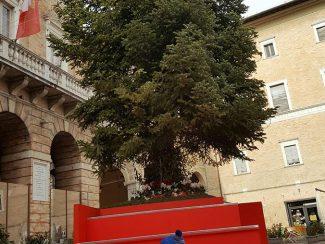 pedana-albero-e1514990972339-325x244