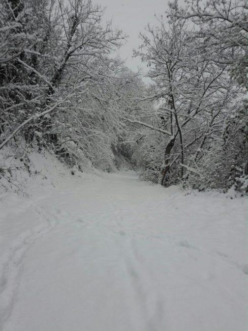 Urbisaglia-neve-5-488x650