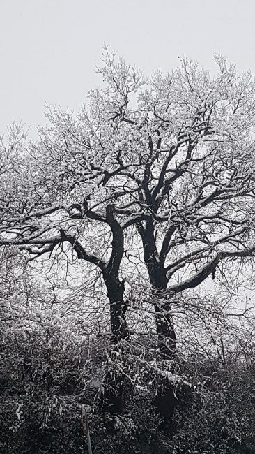 neve-tolentino-5-366x650