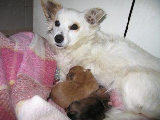 Madre-con-cuccioli-al-canile-di-Macerata