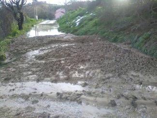 Strada-di-accesso-al-canile-comunale-di-Macerata-04-03-18-325x244
