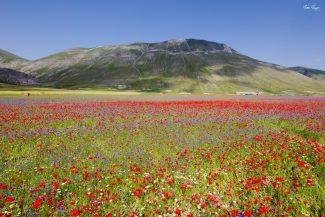 fioritura-castelluccio-matteo-mazzoni-16-325x217