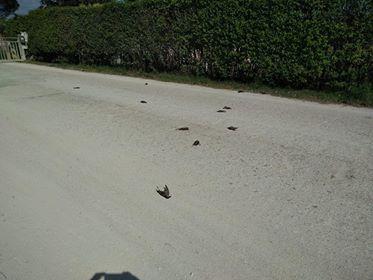 uccelli-morti-orim1