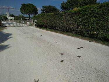 uccelli-morti-orim2