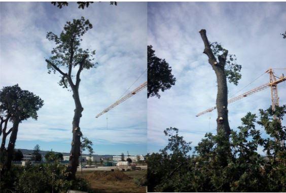 alberi-recanati