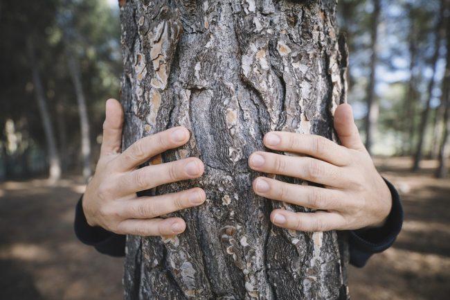albero-ambiente-natura