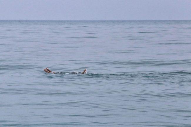 nuotatore-di-novembre-lungomare-sud-FDM-3-650x433