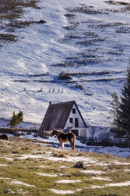 castelluccio-neve-5-433x650