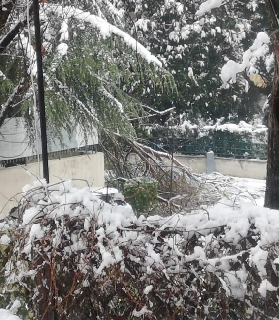 neve-tolentino