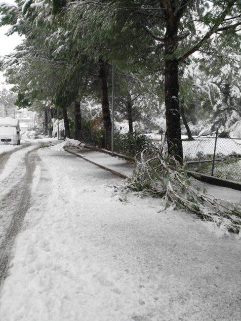 neve-viale-bruno-buozzi-tolentino-2-488x650
